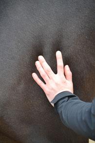 Lieftink dry needling en sportmassage voor paarden Gelderland