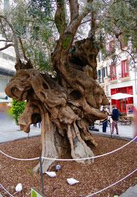 Altstadt Palma de Mallorca