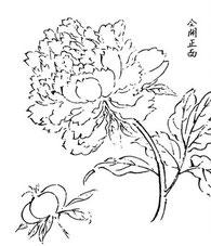 Grande fleur de pivoine.