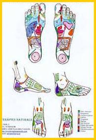 Mapa reflexológico Reflexoterapia Herbolario Alquimista Arrecife Lanzarote