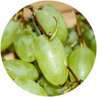 raisin d'italie