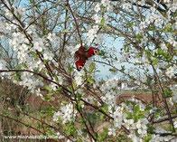 Frühlingsputz für deine Seele, Reinigung der Seele, Ballast abwerfen, Kraftquelle