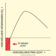 energieverbruik planten, minimale hoeveelheid licht