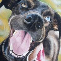 Hunde Portrait eines Dackels