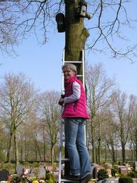 Brigitte Hartmann beim Reinigen der Fledermauskästen in Großheide