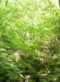 美しい新緑の森。素敵でしたー★