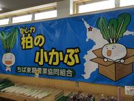 小松菜 なな姫 船橋 野菜 八百屋 通販