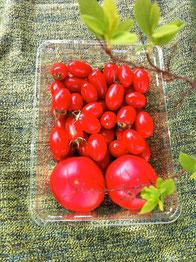 トマト 詰め合わせ 通販