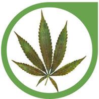 Molybdän (MO) Mangel bei Cannabis - Erkennen und beheben