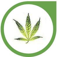 Mangan (Mn) Mangel bei Cannabis - erkennen und beheben