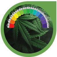 pH-Wert bei Cannabis - Messen und regulieren