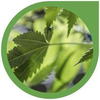 Die Aufnahme von Nährstoffen und Wasser bei Cannabis-Pflanzen