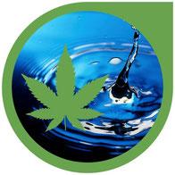 Das beste Wasser für Cannabis Pflanzen - Korrigieren & anpassen