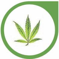 Eisen (Fe) Mangel bei Cannabis - Erkennen und beheben