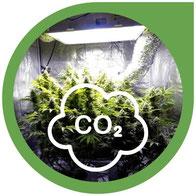 CO2 für Cannabis - Kohlendioxid-Generatoren für den Hanfanbau