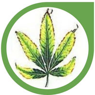 Kalium (K) Mangel bei Cannabis erkennen und beheben
