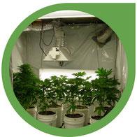 Günstige Growbox Komplettsets und Growräume zusammenstellen