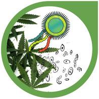 Bakterien- und Pilzbekämpfung bei Cannabis-Pflanzen
