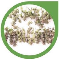 Ernte & Verarbeitung von Hanf - Cannabis