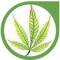Schwefel (S) Mangel bei Cannabis - Erkennen un beheben