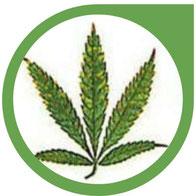 Kalzium (Ca) Mangel bei Cannabis - Erkennen und beheben