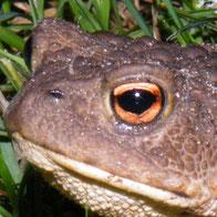 Manche Tiere haben große Augen,...
