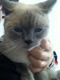 猫カフェ ニャンシー トニーくん