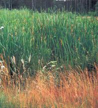 Biotopgestaltung, Teichbau, Teichsanierung