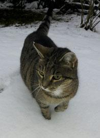 Der erste Schnee in diesem Winter ist auch für Hermine wieder ein Abenteuer!
