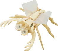 HABA : kit insecte