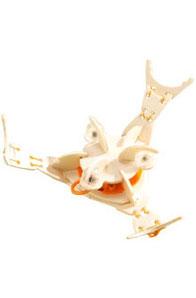 HABA  :Crabe tourbillonneur
