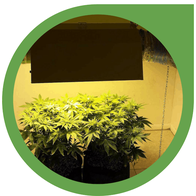 MHL & NDL Grow Lampen für dein Indoor Grow Setup