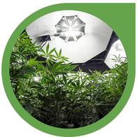 Die besten Grow Lampen für den Indoor Cannabis Anbau