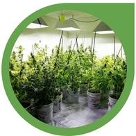 Einen Growraum bauen - Cannabis Indoor Anbau Raum einrichten