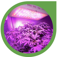 LED Grow Lampe für den Indoor Cannabis Anbau - Grow Led