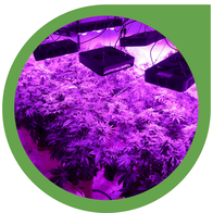 LED Grow Lampen Kaufberatung: Tipps beim Kauf von LED-Panels