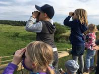 Kinder beobachten die Wildpferde