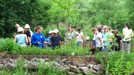 Kinder erkunden das Kräuterrondell