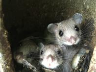 Bennys Nachwuchs (3 Jungtiere) im Vogelnistkasten