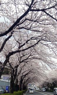 豆さん:東名横浜町田IC近く(4/2)