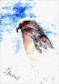 inna-bredereck-auftragsmalerei-vogel-aquarell-habicht-zeichnung