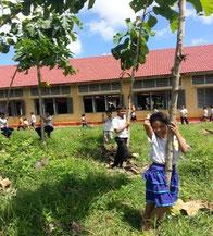 教室の前に植えた木々は青々と成長