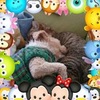 田中さんちのワンコ/猫友大好きケンタくん