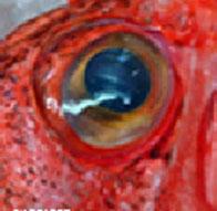 Seestern Fische