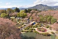 沼田公園の桜まつりイベント。沼田城からの眺望。