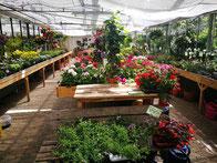 Garten- und Zimmerpflanzen - Gewächshaus