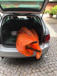 Wildbret Transport, Wildschwein, Auto, Jagd