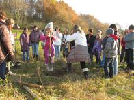 Eifrig bei der Baumpflanzung: die Schüler der 5. Klasse von Frau Lott der Josef-Anton-Rohe-Schule Kleinwallstadt