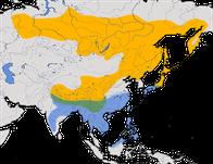 Karte zur Verbreitung des Waldpiepers (Anthus hodgsoni)