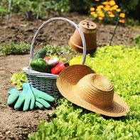 parcelle de jardin potager